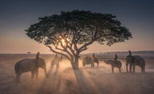 elefantes sob uma arvore de ioimbina