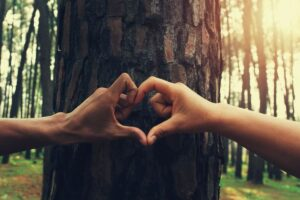 coração com mãos e arvore de fundo